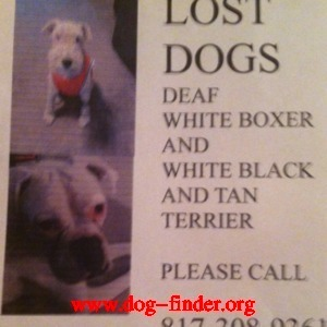 Boxer, White, Deaf; tail cropped; ears not; 60 lbs; dark spots on skin; lost in arlington texas
